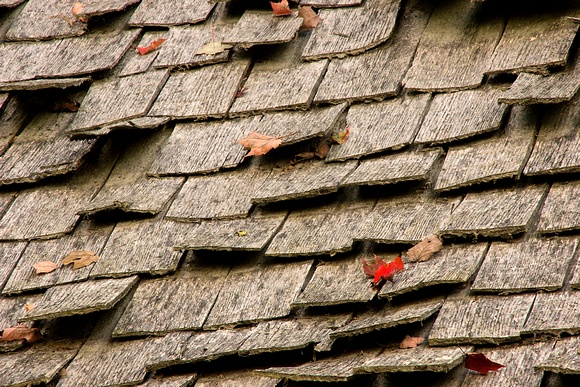 Red Leaf On Roof