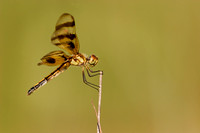 Male Halloween Pennant 2